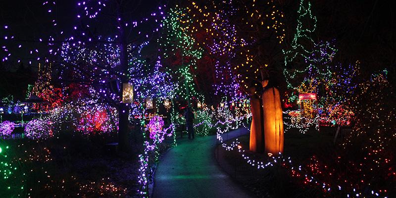 Christmas lights illuminate the night.