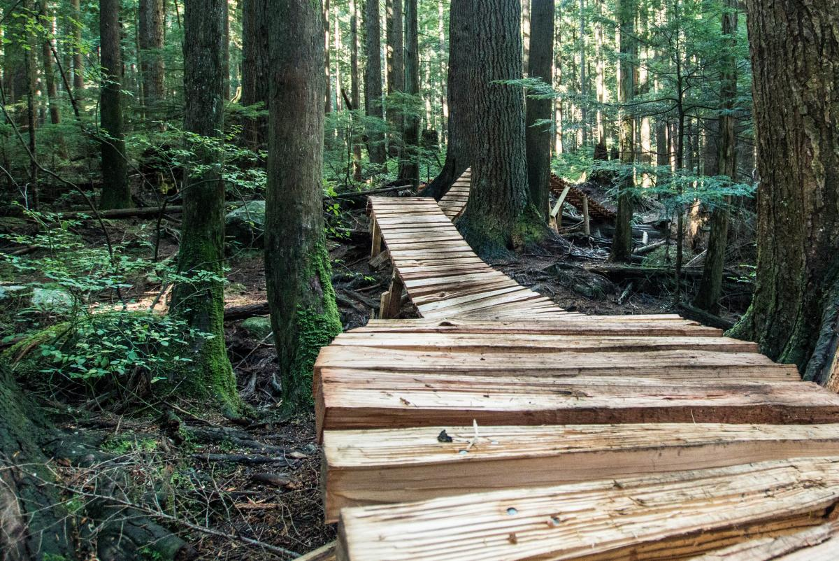 A mountain biking trail