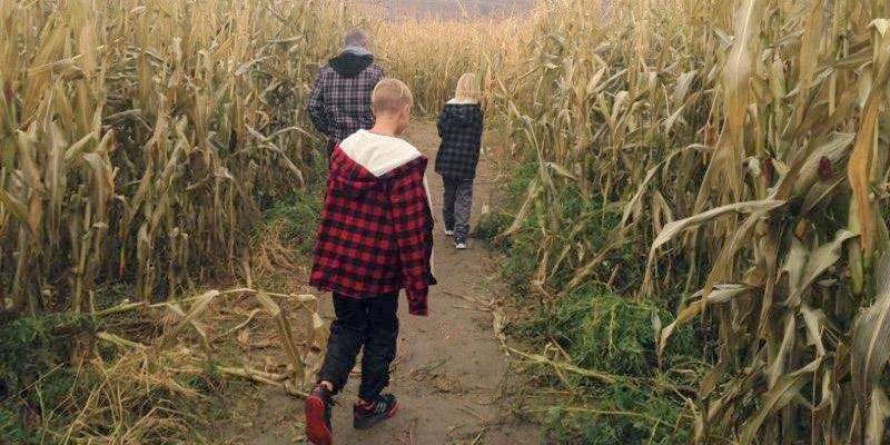 Three people walk down a corn maze.